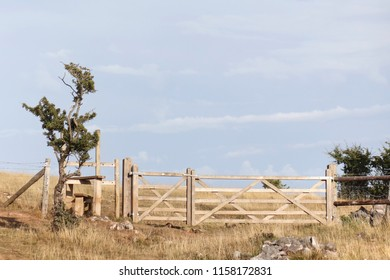 Hillside gate with stile and bush, on the Mendip Hills near Cheddar.
