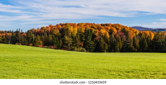hillside of green meadow with wooded bright autumn fall foliage