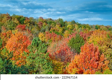 A hillside in Michigan's Cut River Valley displays an wide palette of spectacular fall foliage colors with a cloudy blue sky overhead.