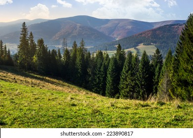 hillside of mountain range with coniferous forest and meadow