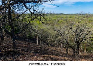 hillside overlooking valley and budding forest during spring at flandrau state park near new ulm minnesota