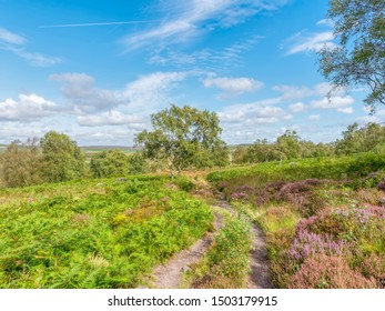 A hillside path winds through dewbse ferns and heather, past Silver Birch trees and over the Derbyshire countryside. HDR, High Dynamic Range, image.