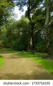 Hillside trees in Contra Costa County, CA.