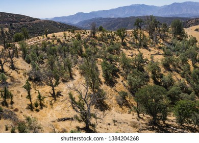 Hilltop covered with woods and trails in the San Gabriel Mountains.