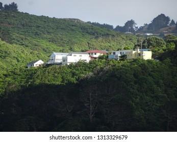 Hilltop houses perching on steep bushclad slopes at Korokoro,  Lower Hutt New Zealand