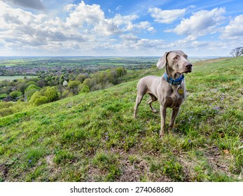 A hilltop view over the lowlands of the Aylesbury Vale with dramatic clouds giving a dappled sun effect. With a dog in the foreground.