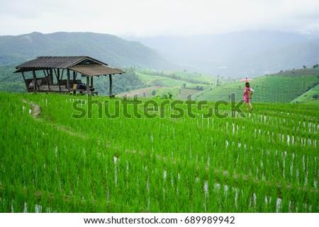 6bba8bbeb Hilltribe farmer walking in rice field terrace with at pa pong piang  village at Chiang Mai