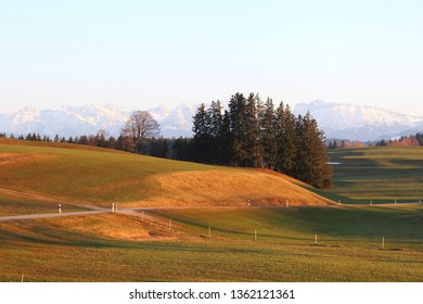Hilly alpine upland with dunged meadows in the evening light, Alps mountains in the background, Allgäu, Bavaria