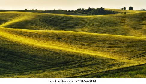 hilly field. picturesque spring field. Agriculture