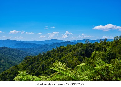 Hilly landscape in a blue haze to the horizon. Spectacular view a cloudy sky and lush tropical rainforest Cameron Highlands, Malaysia. Concept of travel and holiday. The concept of ecological tourism