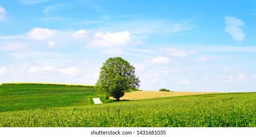 hilly landscape with fields near munich