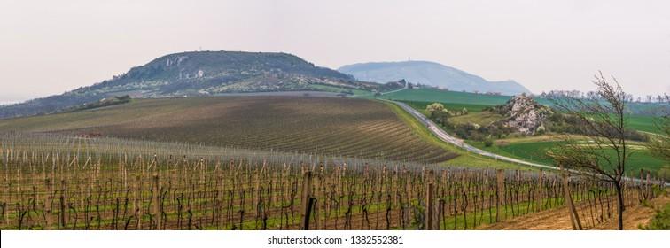 Hilly Landscape With Vineyards, Ruzovy Hill and Kocici Rock near Mikulov, Czech Republic - Shutterstock ID 1382552381
