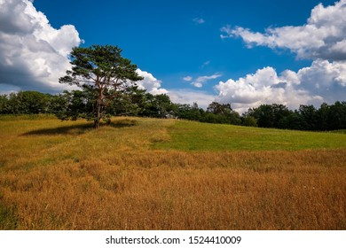"""Hilly meadow landscape with a tree at the """"Naturparkweg"""" (""""Nature Park Hiking Trail"""") in the """"Maerkische Schweiz"""" nature reserve south of the """"Schermützelsee"""""""