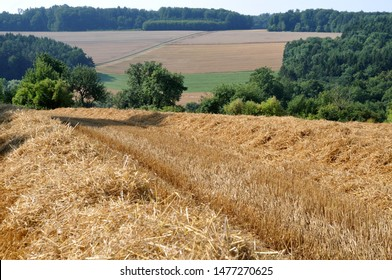 hilly summer landscape in swabian alb in Germany with harvested cereal field and forest in background