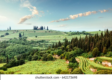 Hilly Vineyard in Italy