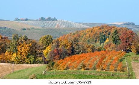 Hils and wineyards landscape at Robadje - Croatia