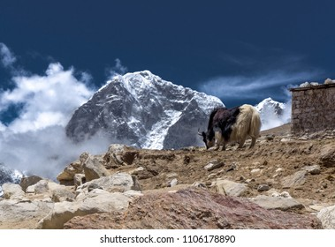 Himalaya mountain view and yak