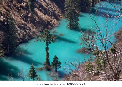 Himalayan firs (Abies spectabilis) and Himalayan spruce (Picea morinda) in water. Amazing flooded forests. Trees rise from lake. Unusual Himalayan valley, wonder of the world, seven wonders