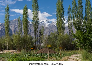 Himalayan mountain landscape, Nubra valley, Ladakh, Jammu and Kashmir state, India
