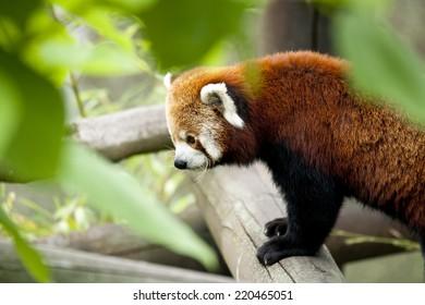 Images Photos Et Images Vectorielles De Stock De Pandaroux
