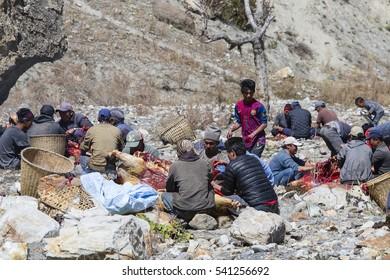 HIMALAYAS, ANNAPURNA REGION, NEPAL - OCTOBER 17, 2016 : Tibetan butcher men butchering yak carcasses for sale in the local market