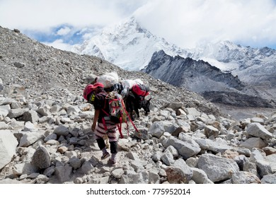 Himalayas,Nepal- cirka November, 2017: sherpa porters and yaks on the way to Everest Base Camp, beautiful sunny weather and spectacular views