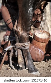 Himba milking a cow