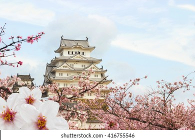 Himeji Castle and full cherry blossom, One of Japan's premier historic castles, Japan