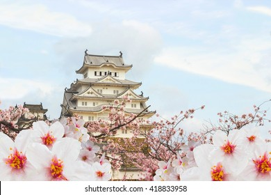 Himeji Castle and full cherry blossom,