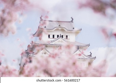 Himeji Castle and full cherry blossom and blurry pink cherry flower, One of Japan's premier historic castles, Japan