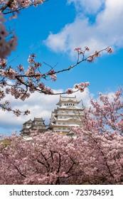 himeji castle with sakura