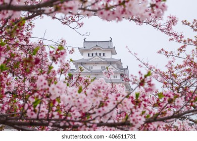 himeji castle surrounded by cherry blossom. This is a UNESCO world heritage site. Japan