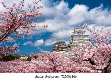 Himejicastle with cherry blossom