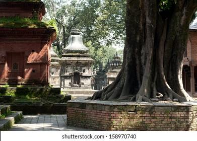Hindu Shrine Pashupatinath Temple. Nepal, Kathmandu