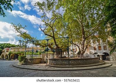 Hippocrates tree / Kos island