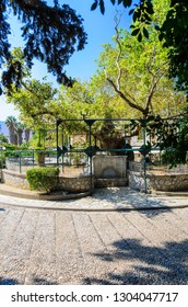 Hippocrates tree. Tranquil spot with a large plane tree that legend says Hippocrates taught his pupils under. Kos, Greece