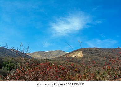 Hips bush with ripe berries. Berries of a dogrose on a bush. Fruits of wild roses. Thorny red dog-rose hips on mountains background under the blue sky
