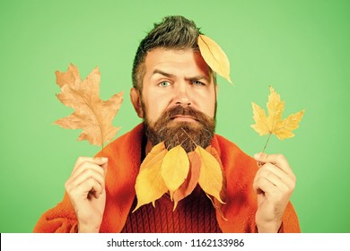 Hipster or bearded guy in autumn on green background. cold and illness. Season and autumn. Man with natural yellow fall leaves beard in plaid. leaves beard at barber and hairdresser.
