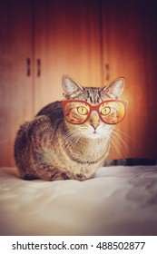 Hipster Cat looking through red vintage shaped glasses