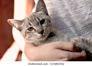 Hipster holding lovely tabby cat or striped kitten with yellow eyes. Concept for pets nursery ,animal health,cat husbandry and people lifestyle.
