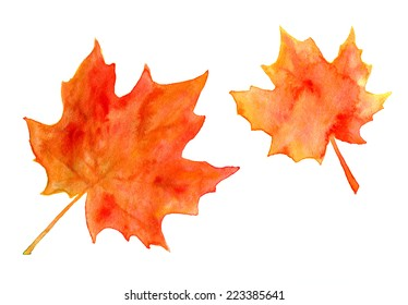 Hi-res scan of bright orange watercolor autumn maple leaves isolated on white.