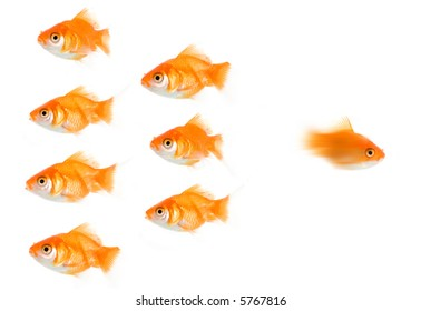 A Hi-resolution picture of an extremely fast goldfish, leading the pack/setting the pace. Maybe this fish is making a run for it, escaping? A highly versatile conceptual image.