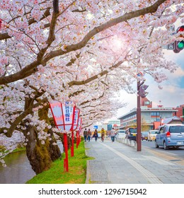 Hirosaki, Japan - April 23 2018: Sakura - Cherry Blossom full bloom at Hirosaki park, one of the most beautiful sakura spot in Tohoku region and Japan