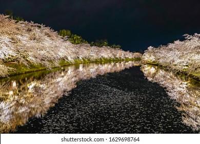 Hirosaki park cherry blossom trees matsuri festival light up at night in springtime. Beauty full bloom pink sakura flowers in west moat with lights illuminate. Aomori Prefecture, Tohoku Region, Japan