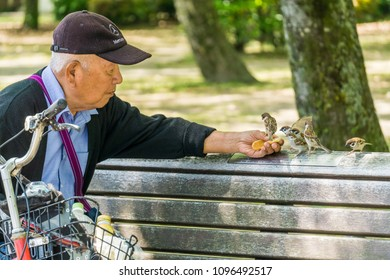 Hiroshima, Japan - May 13 2016: A Japanese man feeds sparrows and a pushy myna-bird from a bench at the Peace Park