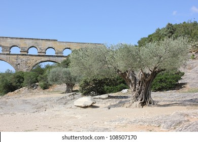 Historic aqueduct Pont du Gard in South France and his famous olive tree