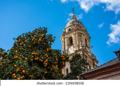 Historic and Artistic Center of Marbella, Marbella, Costa del Sol Occidental, Malaga, Andalusia, Spain, Iberian Peninsula with orange trees