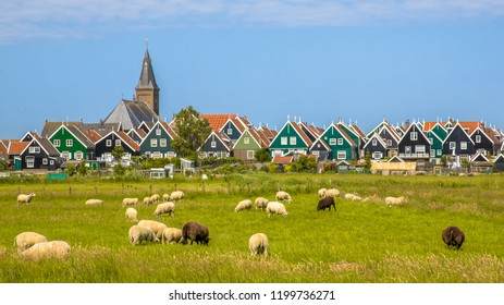 Historic dutch Village with colorful wooden houses and church with sheep on the foreground on the island of Marken in the Ijsselmeer or formerly Zuiderzee, the Netherlands