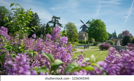 Historic Mill of Sanssouci and blooming purple flower with beautiful clear sky, Potsdam, Germany, 28th April 2018
