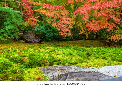 The historic Rurikoin is open to the public during the fall foliage season. Autumn leaves falling in the garden. The scenery of rocks and moss is very beautiful.